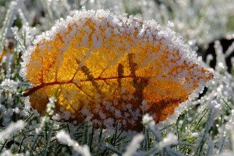 погода_заморозки_іней_осень_листя