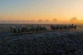 Синоптик назвала дату перших морозів - Погода в Україні