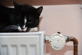 Кот, отопление