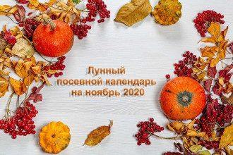 Лунный посевной календарь на ноябрь 2020 - когда и что успеть