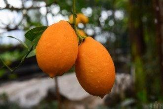 Дієтолог попередила, що лимон шкідливий для зубів та може шкодити шлунку – Лимони шкода