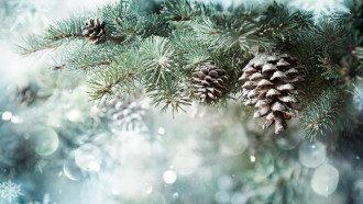 З першим днем зими - листівки, гіфки і привітання з приходом зими