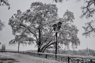 Прогноз погоды на декабрь в Украине / УНИАН