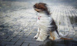 погода_ветер_зіма_снег_собака