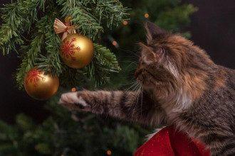 Коли прибирати новорічну ялинку після Нового року - за всіма правилами