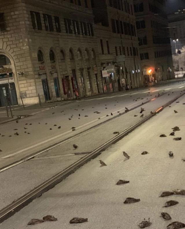 На Новый год 2021 в Италии выпал дождь из мертвых птиц