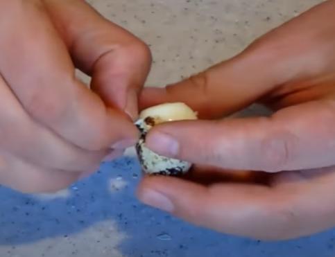 Назван простой способ очистки яиц перепела
