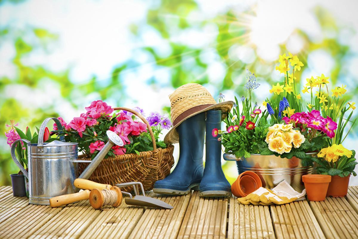 лунный посевной календарь-сад-огород-сапоги-овощи-растения-огородник-садовод
