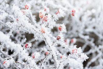 Синоптики попередили, що на Буковину обрушиться сильний мороз
