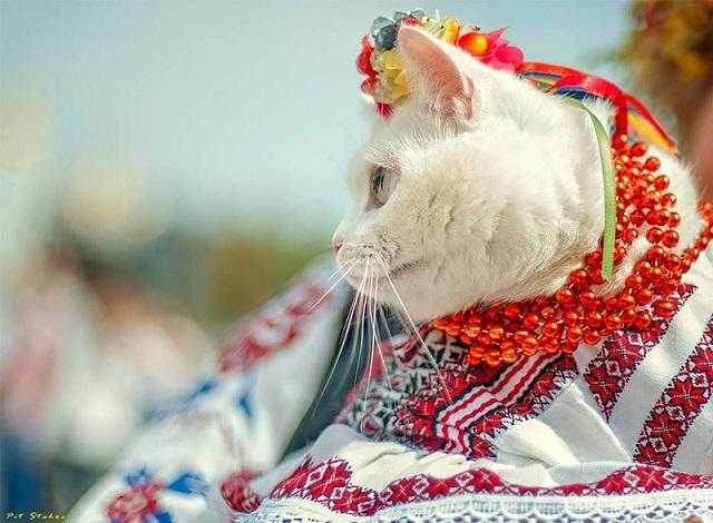 день кішок і котів картинки листівки