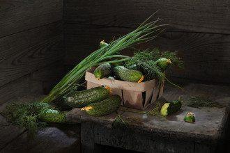 Як виростити огірки на підвіконні взимку самому
