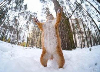 У Гідрометцентрі спрогнозували, що у низці областей України завтра вдень та вночі буде сніг