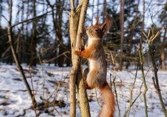 Експерт поділилася, що в другій половині лютого в Україні очікується весняна погода