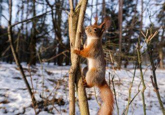 Эксперт поделилась, что во второй половине февраля в Украине ожидается весенняя погода