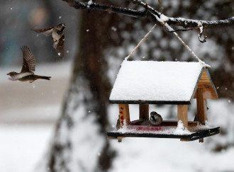 погода, зима, снег