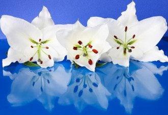 День Світлани - яскраві листівки і привітання з днем ангела Світлани