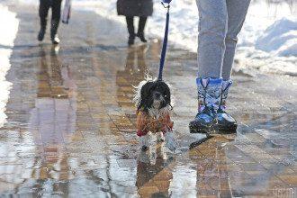 Столице грозит мокрый снег, предупредил Укргидрометцентр