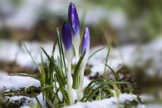 Синоптик Кому погода в Україні обіцяє сніг, а кому тепло