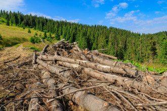 ліс-кругляк, деревина