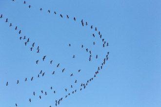 Одному знаку Зодиака прогнозируется обретение новых связей, которые могут стать крышей