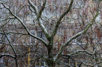 Синоптик обіцяє серйозне похолодання і сніг