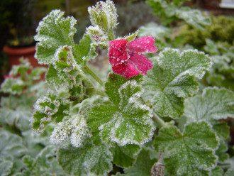 У Гідрометцентрі повідомили, що Україні загрожують заморозки на ґрунті та у повітрі