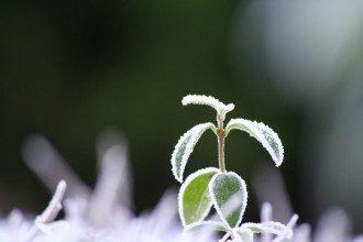 Снег ожидается на Ивано-Франковщине и на Закарпатье
