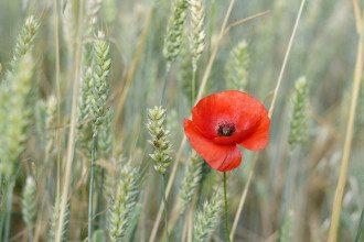 8 травня Свято пам'яті і примирення і День марка прикмети