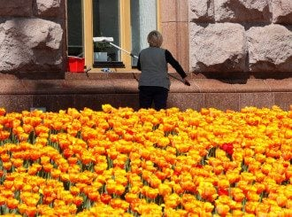Київ, тюльпани, погода