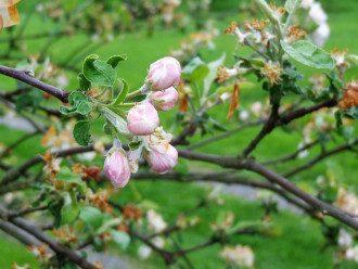 погода, весна, квітуче дерево