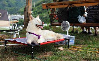 погода, жара, собака