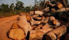 Як відрізнити фахівців-екологів від екотерористів - відповідь експертів