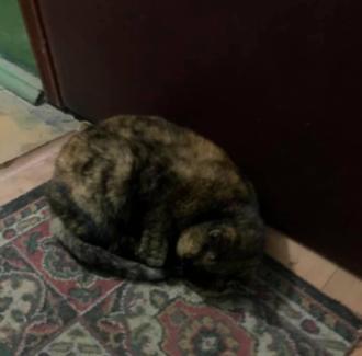 В столице кошка спала на коврике у квартиры, в которой жила с хозяйкой