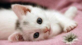 Полицейские узнали, что в Ужгороде малолетние замучили котенка