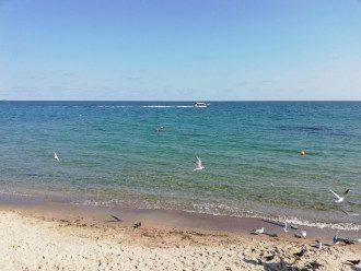 У Бердянську туристів атакують Морські блохи