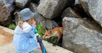 Лисицы на Черном море