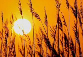 сонце, спека