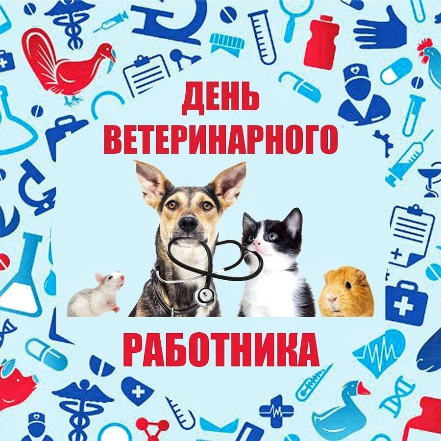 День ветеринара 2021 в Україні: листівки, картинки