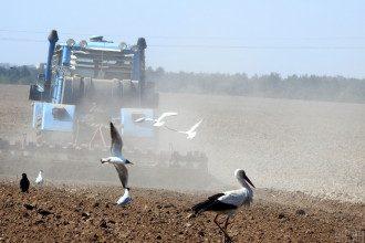 земля, поле, фермери