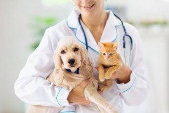 День ветеринара в Україні 2021