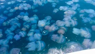 Медузи в Кирилівці