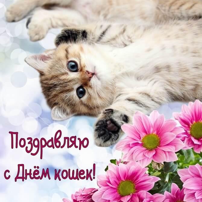 Всемирный день кошки 2021: картинки, открытки, поздравления