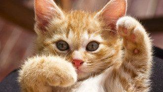 Всемирный день кошки 2021