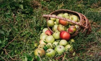 Яболчный Спас