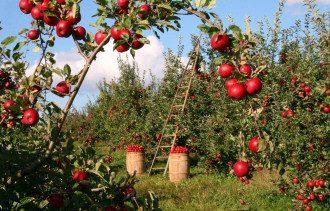 Что нельзя делать на Яблочный Спас 2021