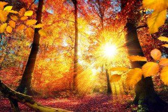 сонце_дерев'я_осень_природа_листя