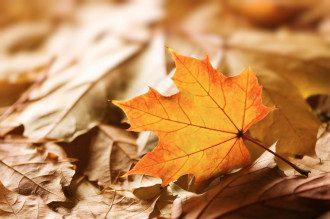 приметы, осень