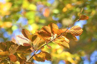 осінь, бабине літо, погода