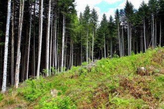 Леса в Украине