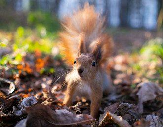 погода, осінь, білка